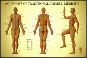 Acupuncture Chart